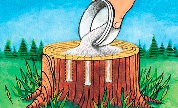 Как избавиться от пней на садовом участке без корчевания и с выкорчевкой