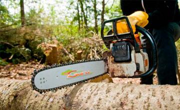 Как срубить дерево на своем участке