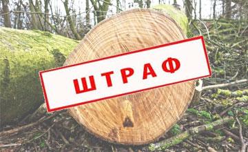 Штраф за спиленное дерево в городе, на своем участке, в лесу и в других местах