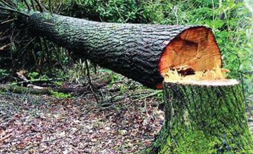 Накпзание за сптл сухого дерева при домовой территории