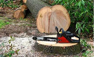 Можно валить дерево сухое без разрешения