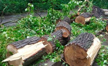 Куда обращаться чтобы спилили деревья