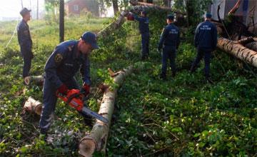 Можно ли спилить ветки дерева во дворе многоквартирного дома
